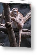 Jungle World Monkey3 Greeting Card