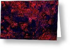 Juniper Berries 1 3 Greeting Card
