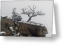 Juniper In Snow-signed-#2572 Greeting Card