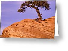 Juniper On Sandstone Greeting Card