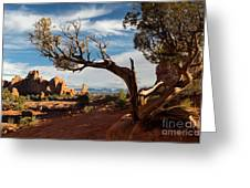 Juniper Tree And Sandstone Fins Greeting Card