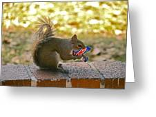 Junk Food Squirrel Greeting Card
