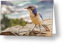 Just A Bird Greeting Card