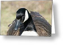 Just A Goose Greeting Card