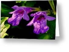 Just A Little Wild Flower Greeting Card