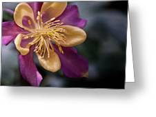 Just A Pretty Flower Greeting Card