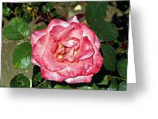 Just A Rose Greeting Card