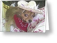 Just Because She Is A Chihuahua Greeting Card