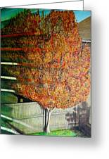 Just Before Fall Greeting Card