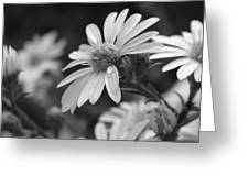 Just Black And White Greeting Card