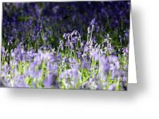 Just Bluebells  Greeting Card