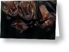 Just Hanging Around - Bats Greeting Card