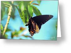 Just Hanging Out - Red-spotted Purple Butterfly Greeting Card