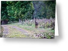 Just Off The Trail Greeting Card