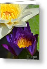 Just Opening Purple Waterlily With White - Vertical Greeting Card