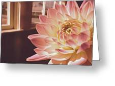 Just Petals Greeting Card