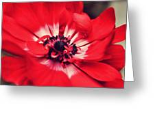 Just Red Greeting Card