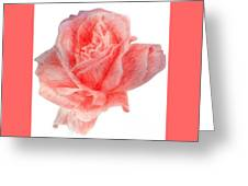 Just Rose Greeting Card