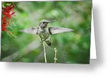 Just Spread Your Wings  Greeting Card