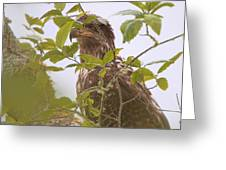 Juvenile Bald Eagle In Leaves Greeting Card