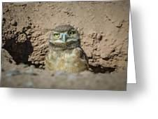 Juvenile Burrowing Owl-img_164817 Greeting Card