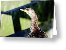 Juvenile Cormorant Profile Greeting Card