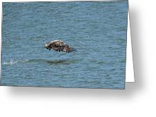 Juvenile Eagle Fishing Pickwick Lake Tennessee 031620161315 Greeting Card