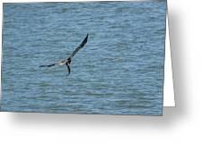 Juvenile Eagle Fishing Pickwick Lake Tennessee 031620161330 Greeting Card