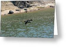 Juvenile Eagle Going Fishing Pickwick Lake Tennessee 031620161304 Greeting Card