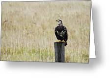 Juvenile Eagle On Post Greeting Card