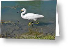 Juvenile Egret Greeting Card
