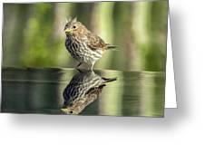Juvenile House Sparrow 0689 Greeting Card