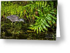 Juvenile Night Heron Greeting Card