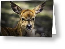 Juvenile Nyala  Greeting Card