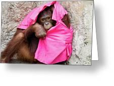 Juvenile Orangutan Greeting Card