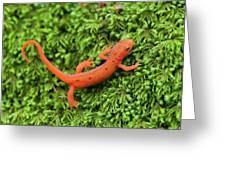Juvenile Red-eft Green Moss North Carolina Greeting Card