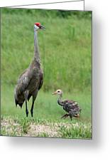 Juvenile Sandhill Crane With Protective Papa Greeting Card