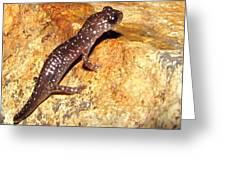 Juvenile Slimy Salamander Greeting Card