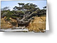 Kalaloch Hanging Tree Greeting Card
