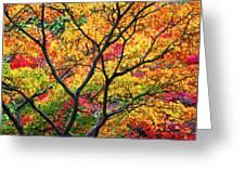 Kaleidoscope Of Autumn Color Greeting Card