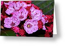 Kalmia Latifolia - Firecracker Mountain Laurel 001 Greeting Card