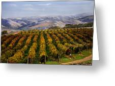 Kalthoff Common Vineyard Greeting Card
