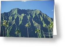 Kaneohe Palm Greeting Card