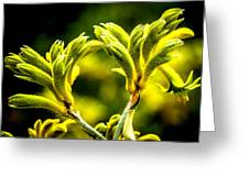 Kangaroo Paw 2 Greeting Card