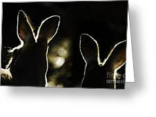 Kangaroos Backlit Greeting Card