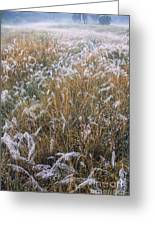 Kans Grass In Mist Greeting Card
