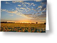 Kansas Sunflowers At Sunset Greeting Card
