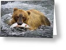 Katmai Grizzly Greeting Card