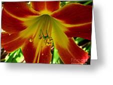 Katydid Surprise Greeting Card