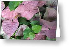 Kauai  Pinks Greeting Card